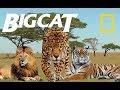 Greatest Big Cats - Most Deadly Apex Predators on Earth (Nat Geo)