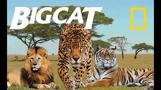 Greatest Big Cats - Most Deadly Apex Predators on Earth (Nat Geo)