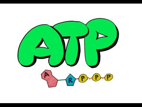 9dk'da ATP