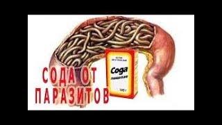 ОТ ВСЕХ ВИДОВ ГЛИСТОВ - СОДА 19.02.2019