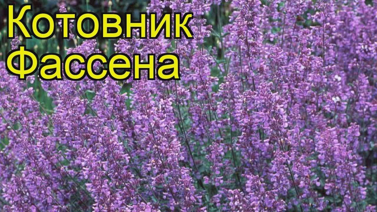 Змей соблазнитель Татьяна Полякова купить книгу, скачать, читать .