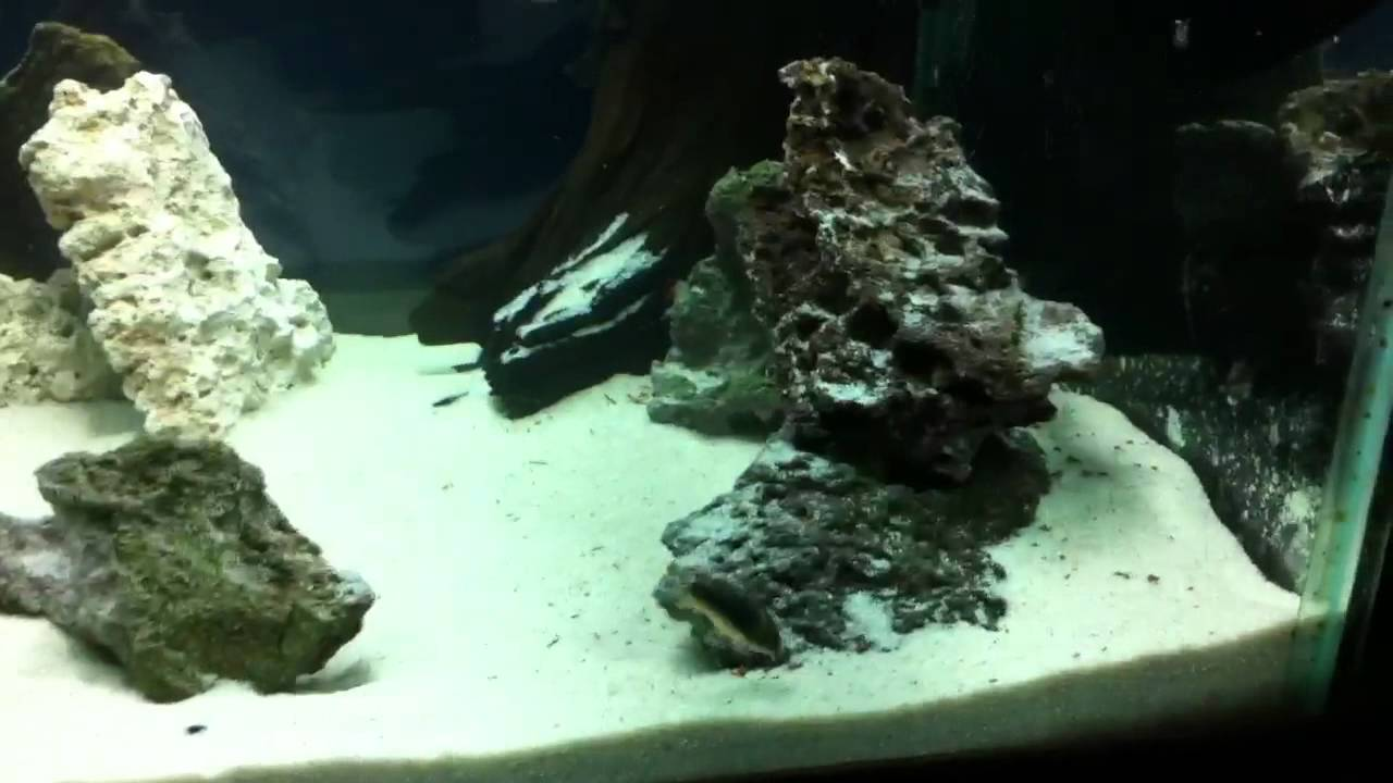 how to prepare pool filter sand for an aquarium