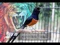 Panji Wiguna Murai Batu Reog Widodo Dlanggu  Mp3 - Mp4 Download