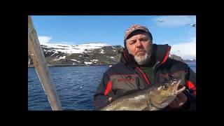 Хорошая морская рыбалка в Мурманске с катера на спиннинг ...
