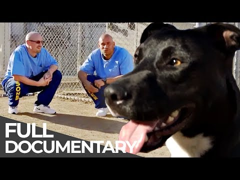 Prison Dogs: Inmates as Dog Trainers | Free Doc Bites | Free Documentary