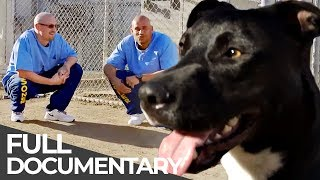 Dogs Behind Bars: Inmates as Dog Trainers | Free Doc Bites | Free Documentary