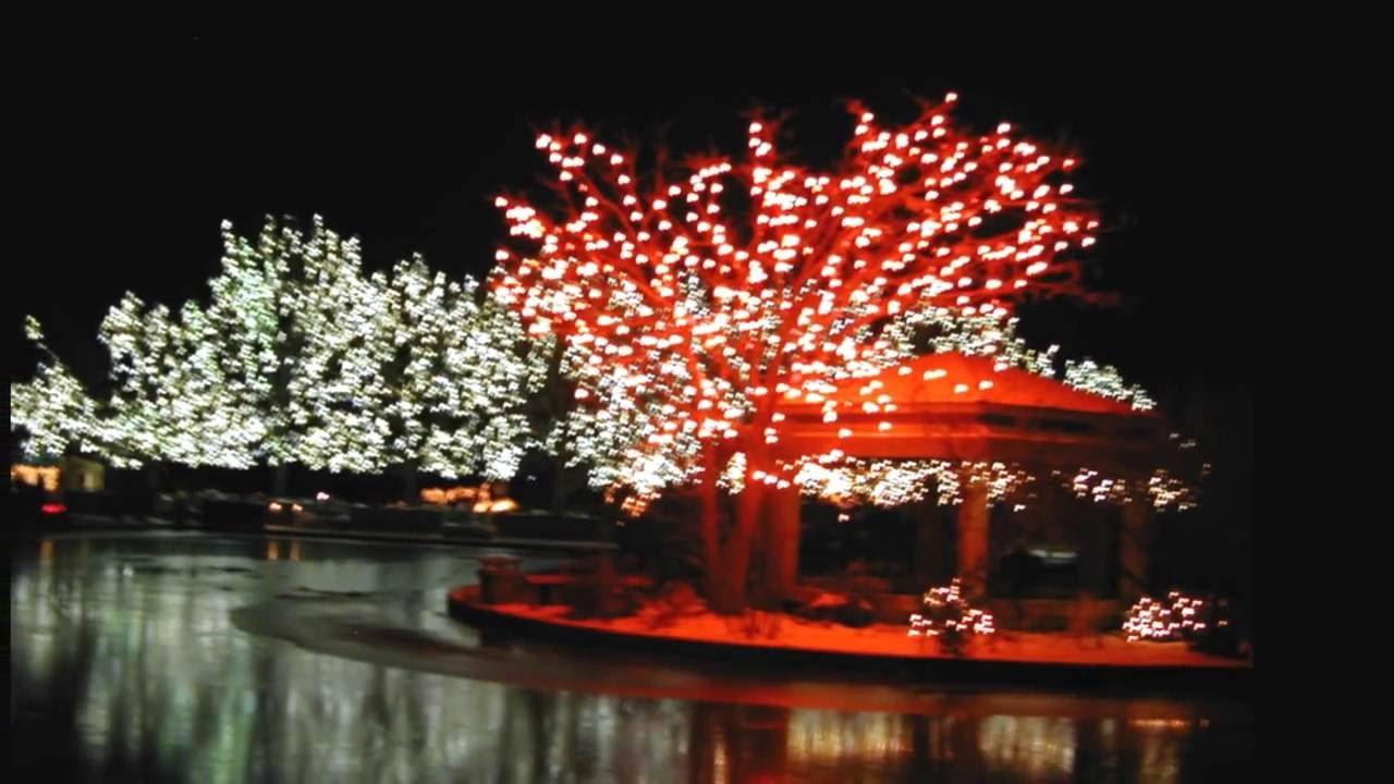 Blossoms Of Light Denver Botanic Gardens Youtube