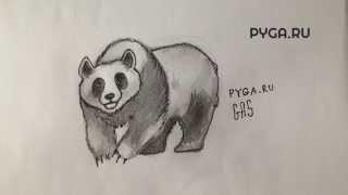 Как нарисовать панду карандашом поэтапно? [Видеоурок]