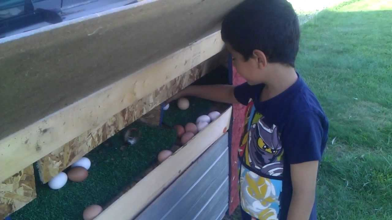 Collecting Chicken Eggs From The Roll Out Nestboxs Youtube