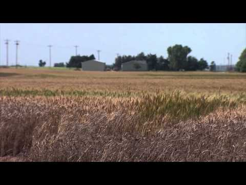Woods County Wheat Tour (6/06/15)