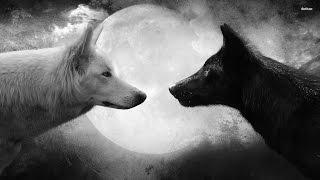 Олег Сунцов - Две собаки, которые живут в нашем сердце