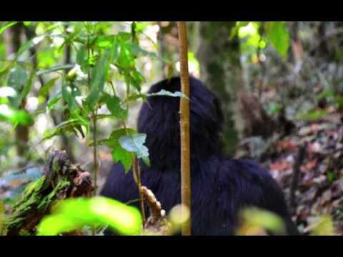 Kenia, Uganda, Rwanda, Little Angels & Gorilla Trekking (Bitukura Family)