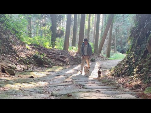 【散歩】しっぽがご機嫌な猫、タッタカ駆け抜ける柴犬 Walking in the woods