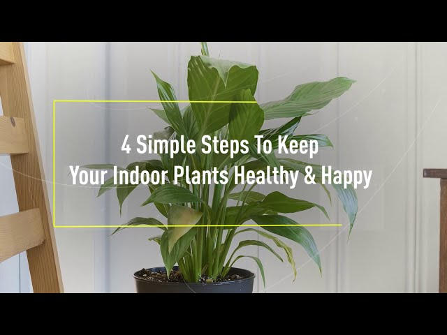 Indoor Plants Care Tips - 4 Simple Steps | ZAD Interiors