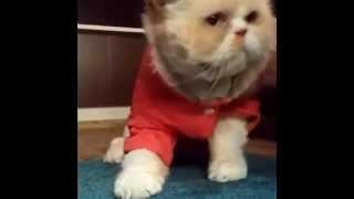 Подборка говорящих кошек/Selection of talking lady-cats