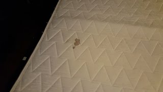 Westgate Park City Resort REVIEW, most dirty and disgusting hotel.