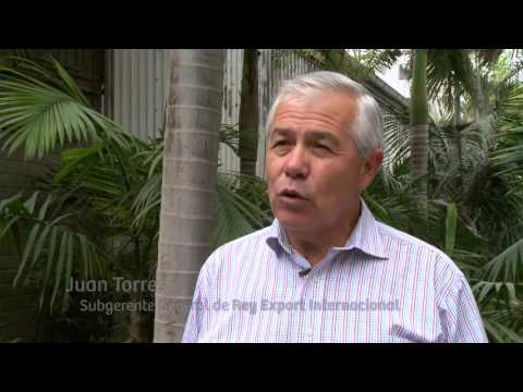 Exportando Perú 18/10/15 - Desarrollo de mercados: Rey Export Internacional