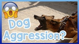 Why is My Dog Aggressive? Find Out Why Your Dog is Being Aggressive...