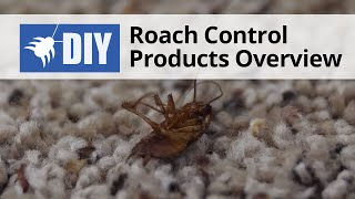 What Products Do I Need to Get Rid of Roaches for Good?