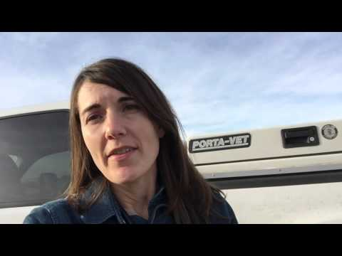 Calf Video