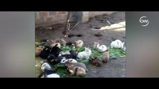 Organización busca rescatar a colonia de conejos en Hipódromo - CHV Noticias