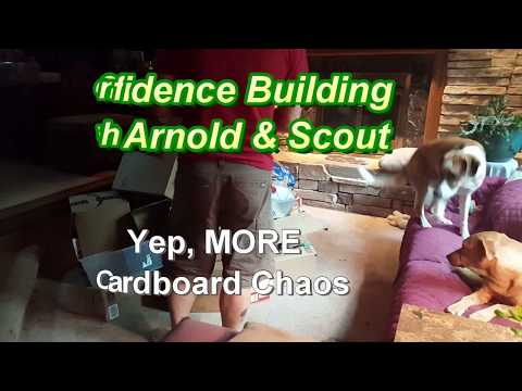 Confidence Building with Arnold - Yep, MORE Cardboard Chaos