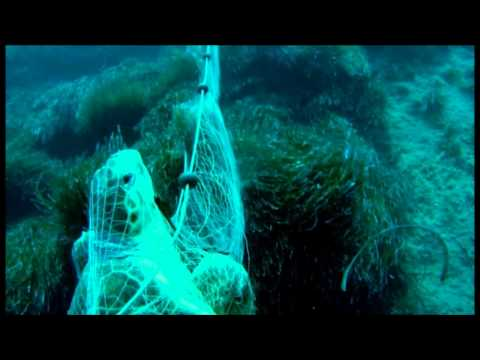 Saving A Turtle From Fishing Nets