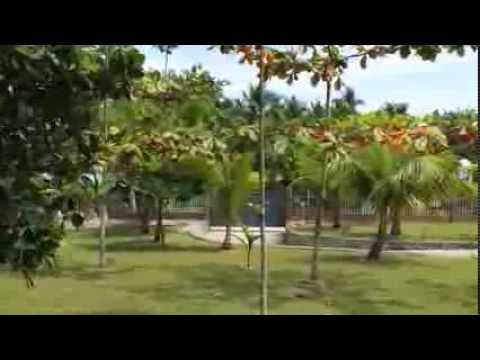SOLD!!!! House in Carcar Cebu in 1.3 hectare land