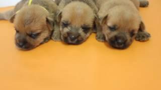 【子犬販売 スマイルわん】で検索お願いいたします! http://smile-1one...