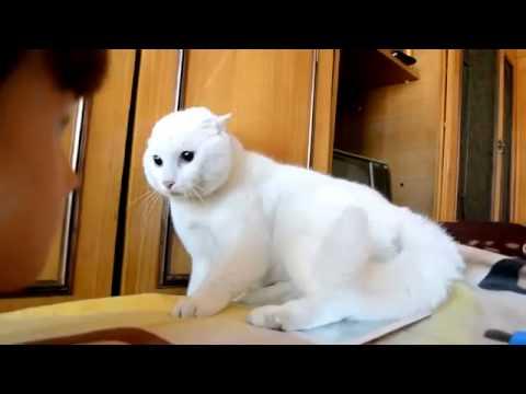 человек белый кот белый видео
