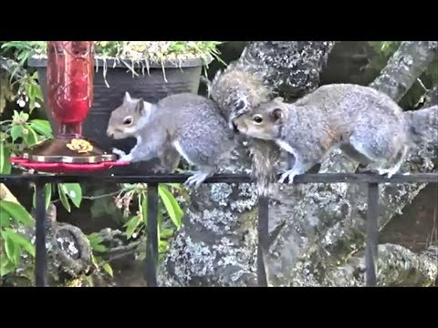 The Adventures of Nibbler & Chippy | Hummingbird Feeder | S1 E1