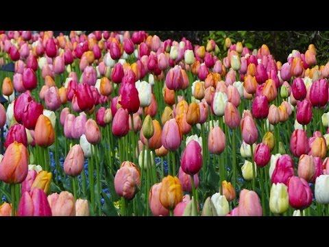 Spring Flowers In Butchart Garden 2014 Victoria Bc Canada Youtube