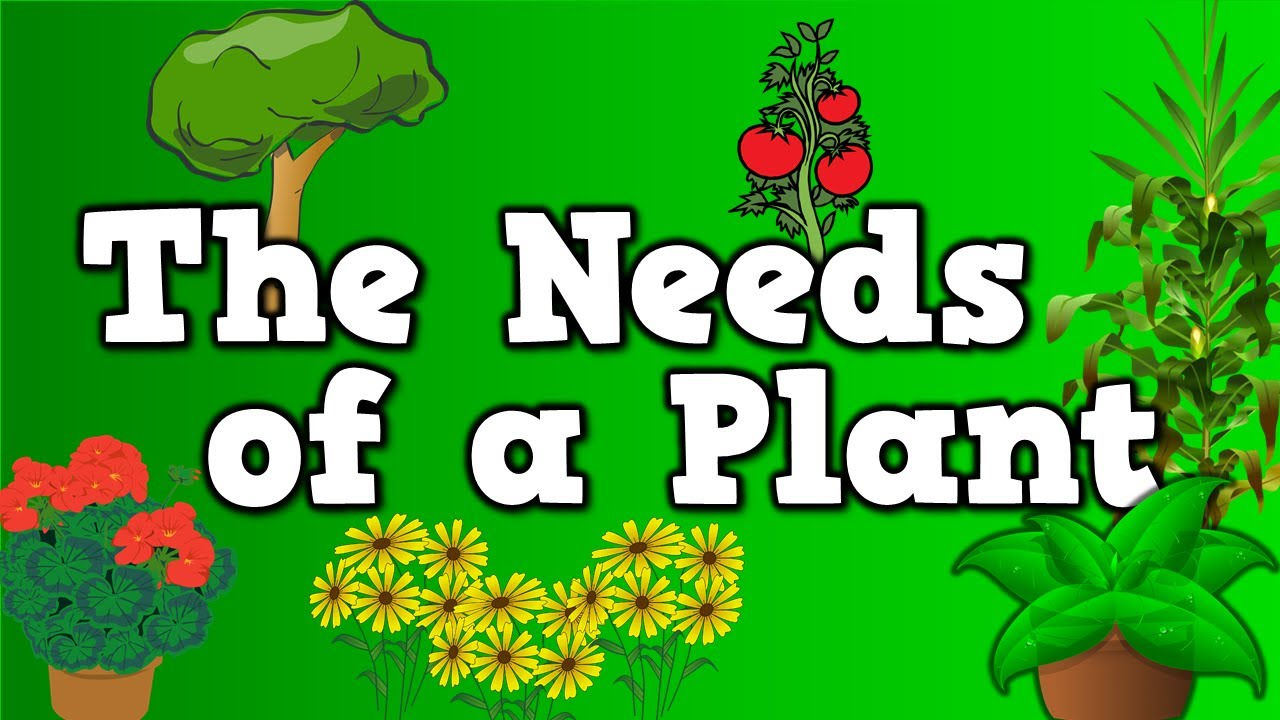The Needs of a Plant song for kids about 5 things plants need to – Plant Needs Worksheet