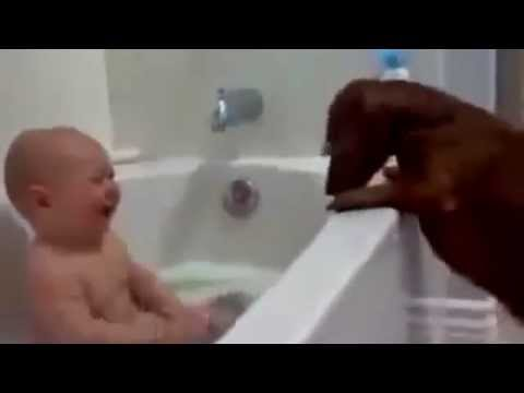 Happy National Dog Day | Dogs And Baby Compilation