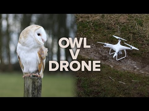 Barn owl vs. DJI drone: Which is the ultimate flyer?