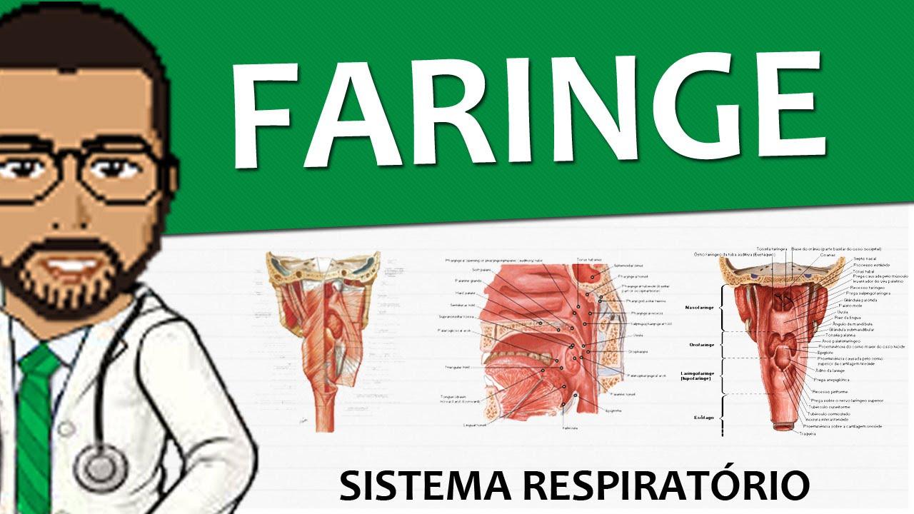 Sistema Respiratório 04 - Faringe (Anatomia e Histologia) - Vídeo ...