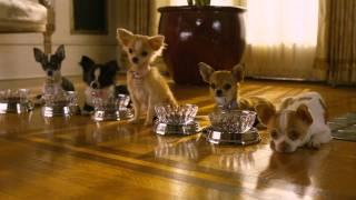 Perdido pra Cachorro 2 - Trailer - Em Disney DVD