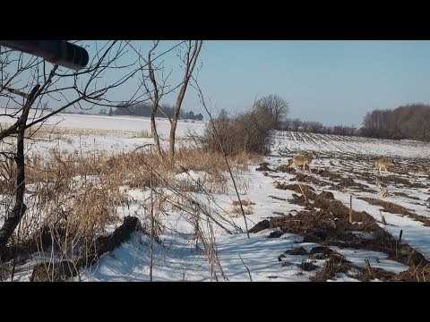 coyote hunting Ontario 2019