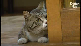 Stray Cat Is Sad Because He Can't Join The Family He Visits Every Day | Kritter Klub