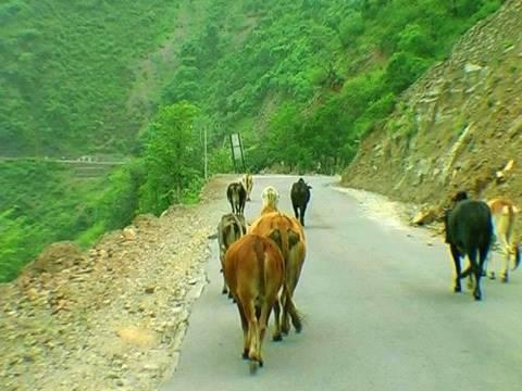 Roadside view, Haridwar