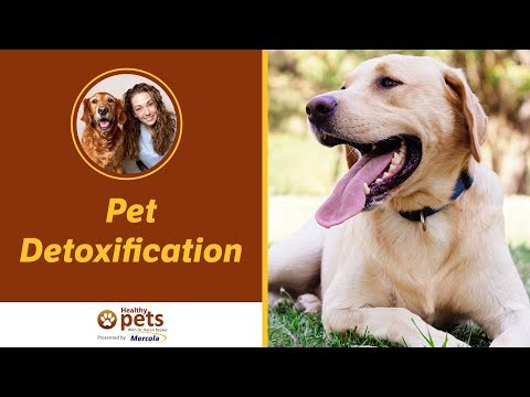 Dr. Becker Discusses Pet Detoxification