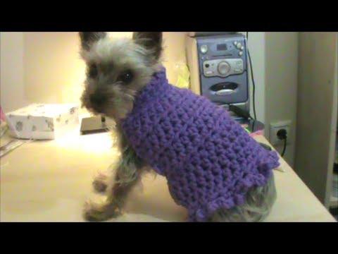 d371c27d1306 Πλεκτό πουλοβεράκι σκύλου - YouTube