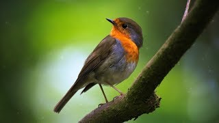 """Peaceful Relaxing Instrumental Music, Meditation and Spa Music """"Birds of the Earth"""" by Tim Janis"""