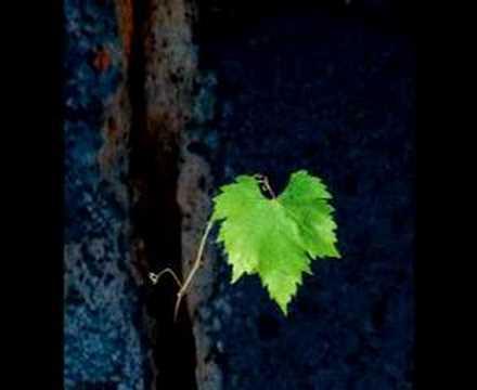 Elena Orlowa — The Grapevine Seed — Виноградная косточка