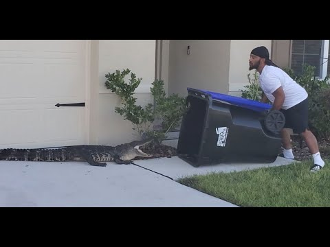 The-Black-Dundee-catch-alligator-using-a-garbage-can