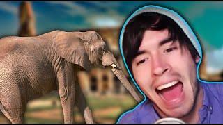 un elefante en el camino