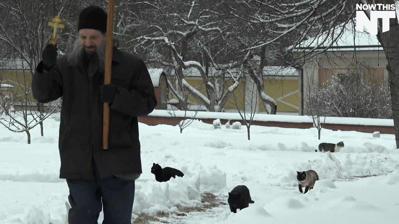 Man Blesses And Feeds Stray Cats Every Day Like  NH