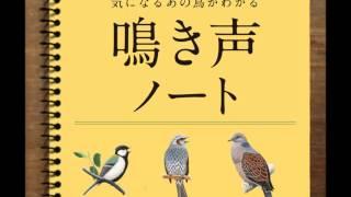 日本野鳥の会 鳴き声ノート 再生リスト