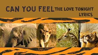 THE LION KING 2019 - CAN YOU FEEL THE LOVE TONIGHT  ( LYRICS )