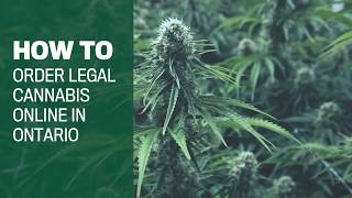 How to buy legal Ontario weed online in 7 steps thumbnail
